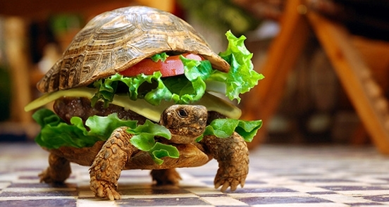 native-advertising-examples-turtle-burger