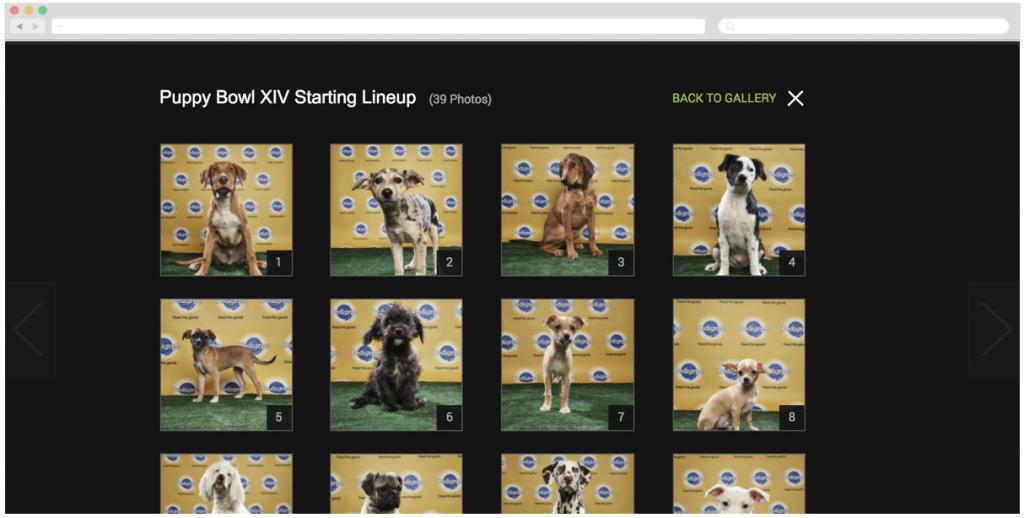 Pedigree + Animal Planet's 'Puppy Bowl XIV Starting Lineup'